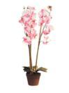EUROPALMS Orhidee, roz, 80cm