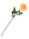 EUROPALMS Trandafir crem, 65cm