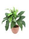 EUROPALMS Spathiphyllum, 85cm