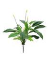 EUROPALMS Spathiphyllum, 71cm