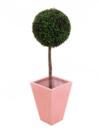 EUROPALMS Copăcel sferic de cimșir, 60cm, diametru 30cm