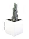 EUROPALMS Cactus deget flocos, 90cm