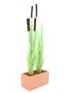 EUROPALMS Stuf  verde deschis cu papură, 152cm