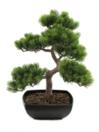 EUROPALMS Pin bonsai, 50cm