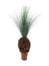 EUROPALMS Palmier ierbos cu trunchi noduros, 90cm