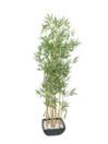 EUROPALMS Bambus in bol, 150cm