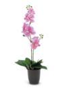 EUROPALMS Orhidee roz, 57cm