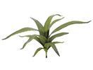 EUROPALMS Aloe verde, 66cm