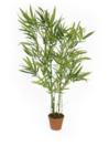 EUROPALMS Bambus verde, 115cm