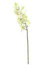 EUROPALMS Ramură de orhidee, crem, 70cm