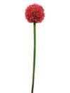 EUROPALMS Ramură de floare de usturoi, roșie, 55cm