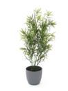 EUROPALMS Asparagus, 50cm