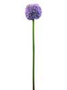 EUROPALMS Ramură de floare de usturoi, violetă, 55cm