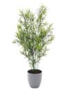 EUROPALMS Asparagus, 70cm