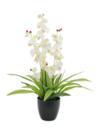 EUROPALMS Orhidee albă, 80cm