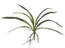 EUROPALMS Frunze verzi de orhidee, 45cm