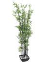 EUROPALMS Bambus in bol, 180cm