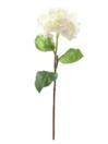 EUROPALMS Ramură de hortensie crem, 76cm