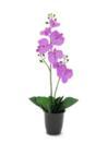 EUROPALMS Orhidee violet, 57cm