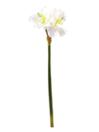 EUROPALMS Ramură de Amaryllis albă, 72cm