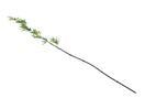 EUROPALMS Creangă de  bambus cu frunze, 180cm, 6 buc