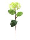 EUROPALMS Ramură de hortensie verde, 76cm