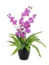 EUROPALMS Orhidee violet, 80cm