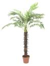 EUROPALMS Cocotier cu 18 frunze, 160cm