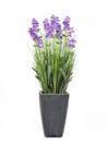 EUROPALMS Lavandă violet, 45cm