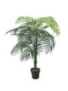 EUROPALMS Palmier Areca cu frunze mari, 175cm