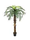 EUROPALMS Cocotier regal,  160cm