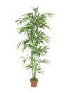EUROPALMS Bambus, 150cm