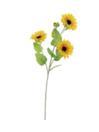 EUROPALMS Ramură de floarea soarelui, 70cm