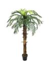 EUROPALMS Cocotier regal, 180cm