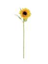 EUROPALMS Floarea soarelui, 70cm