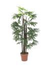 EUROPALMS Palmier Raphis, 120cm