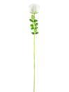 EUROPALMS Trandafir din sticlă albă, 81cm, 12 buc