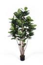 EUROPALMS Arbore de cauciuc, 180cm