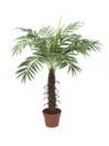 EUROPALMS Cocotier cu 12 frunze, 90cm