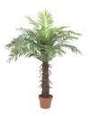 EUROPALMS Cocotier cu 15 frunze, 120cm