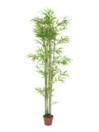 EUROPALMS Bambus, 180cm