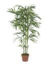 EUROPALMS Bambus, 120cm