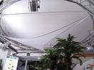 EUROPALMS Panză decorativă circulară, 1200 cm