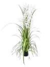 EUROPALMS Orhidee pitice, albe, 140cm