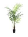 EUROPALMS Palmier Areca Palm cu frunze mari, 125cm